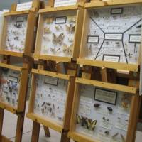 Enns Entomology Museum exhibit